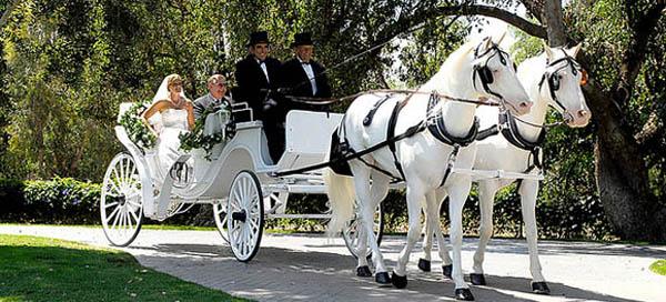 Cвадебные фото, кареты на свадьбу, сани на свадьбу, лошади на